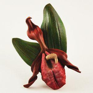 Website-Shop-Images---Moccasin-Flower-Pin-600